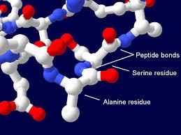دانلود پاورپوینت پپتیدهای زیست فعال